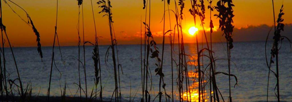 Garden City Myrtle Beach Surfside Vacation Rentals Real Estate